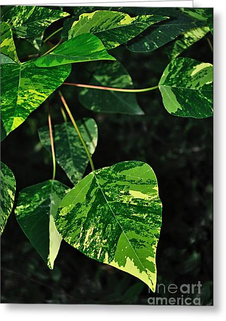 Bright Variegated Leaves Greeting Card