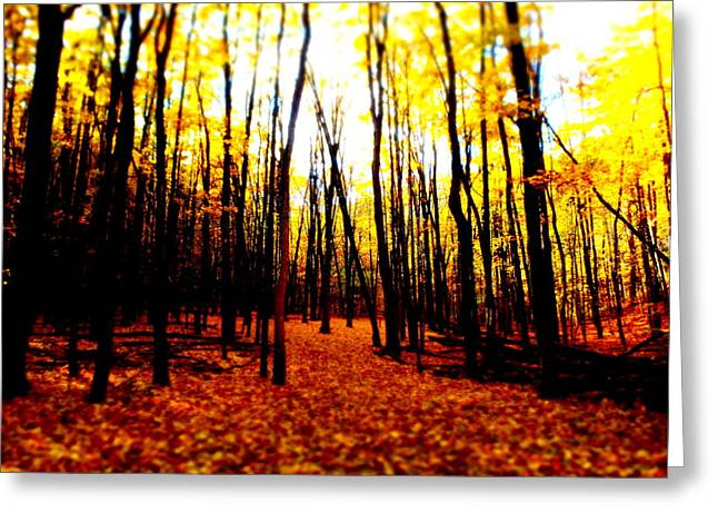 Bright Woods Greeting Card