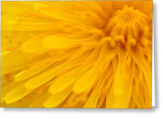 Bright Yellow Dandelion Flower Greeting Card by Natalie Kinnear