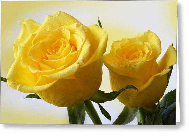 Bright Yellow Roses. Greeting Card by Terence Davis