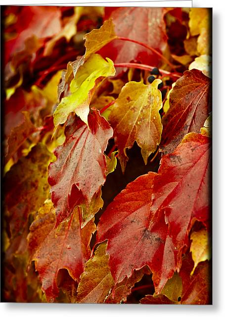 Brightest Before The Fall Greeting Card by Christi Kraft