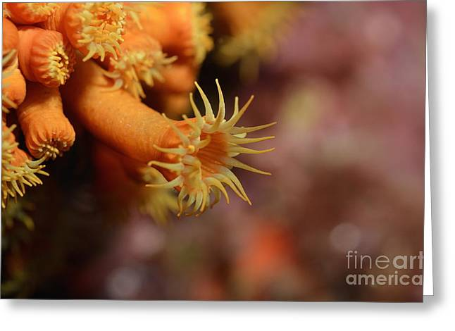 Brightly Colored Yellow Encrusting Anemone Greeting Card by Sami Sarkis