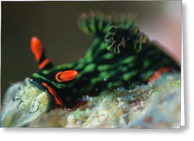 Brightly Coloured Nudiranch Greeting Card