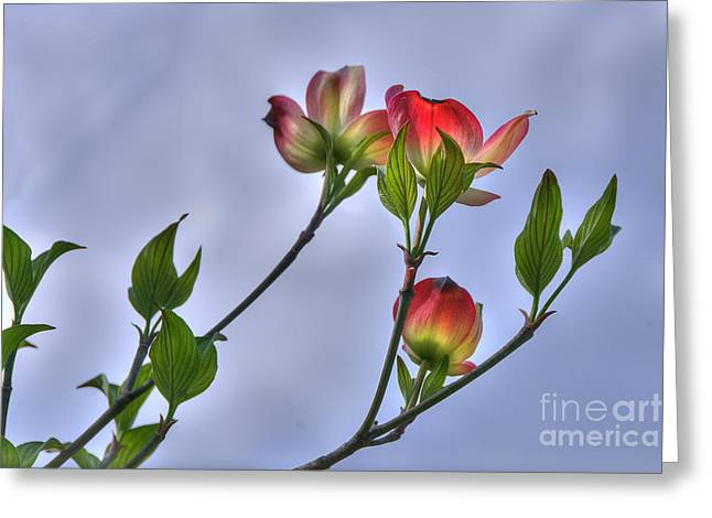 Greeting Card featuring the photograph Brillant Springtime by Wanda Krack