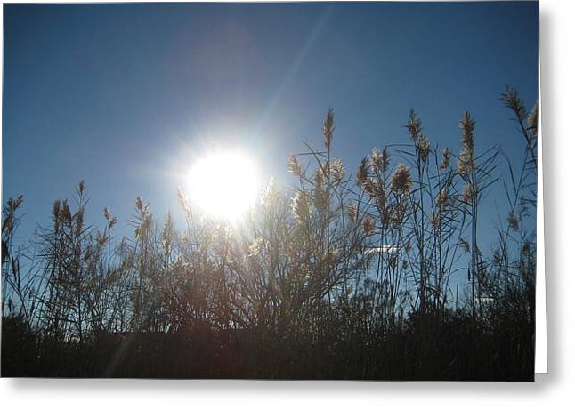 Brilliance In The Grasses Greeting Card