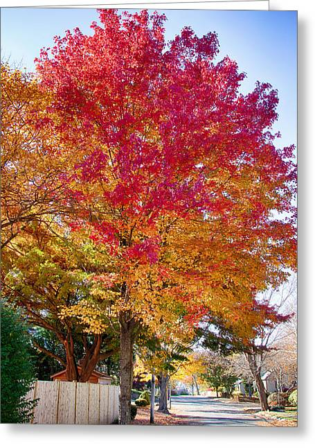 brilliant autumn colors on a Marblehead street Greeting Card