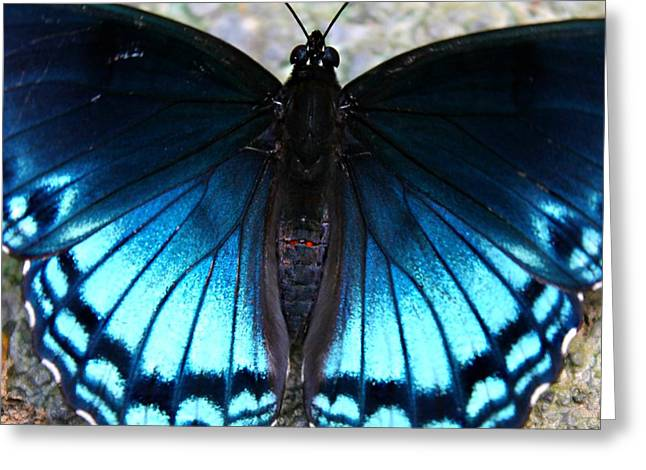 Greeting Card featuring the photograph Brilliant Butterfly by Candice Trimble
