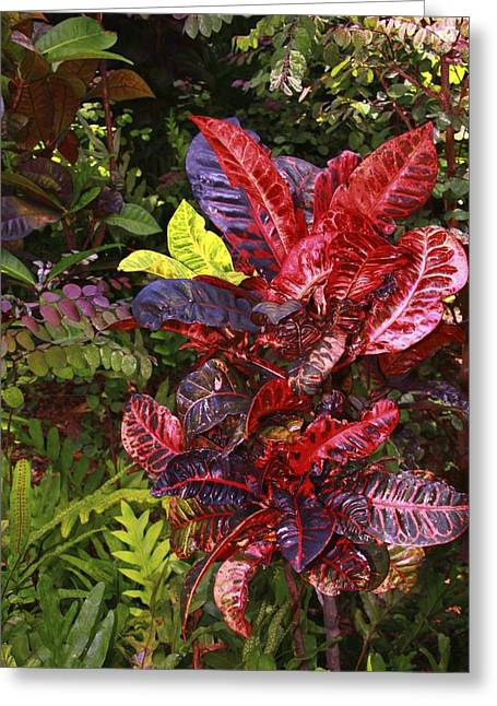 Brilliant Colors Of Leaves Greeting Card