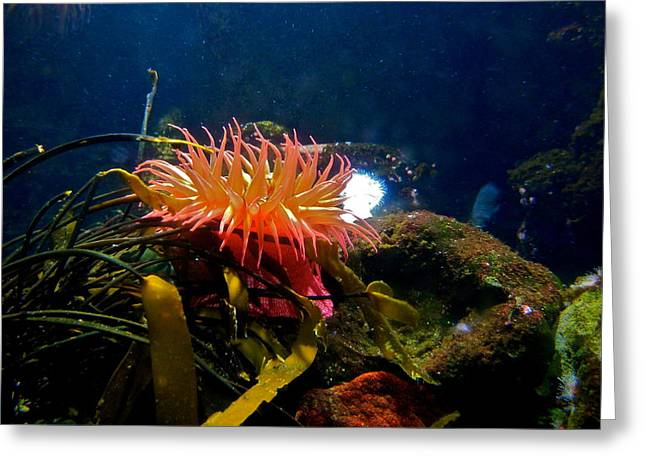 Brilliant Coral Anemone Greeting Card by Kirsten Giving
