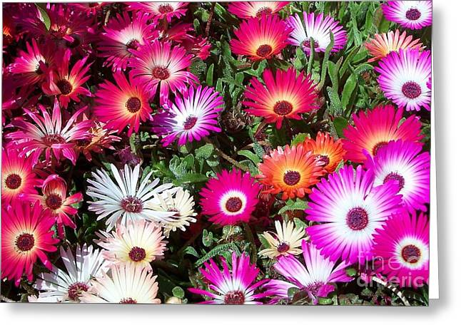 Greeting Card featuring the photograph Brilliant Flowers by Chalet Roome-Rigdon