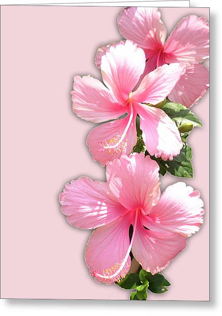 Brilliant Pink Hibiscuses Greeting Card