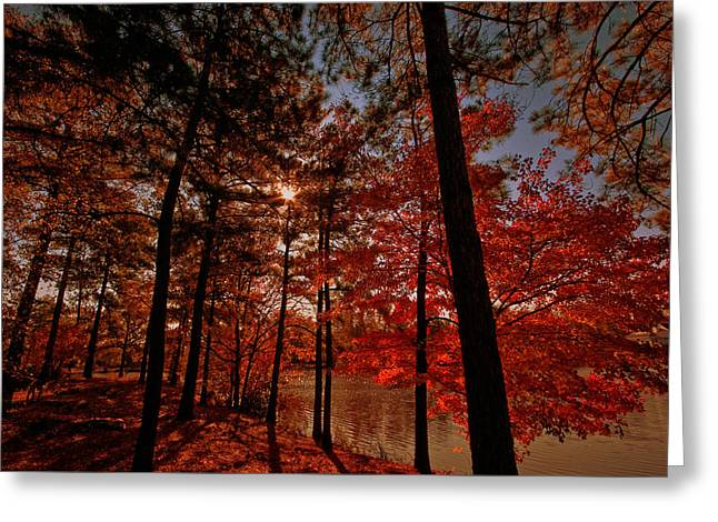 Greeting Card featuring the photograph Brilliant Shade by John Harding