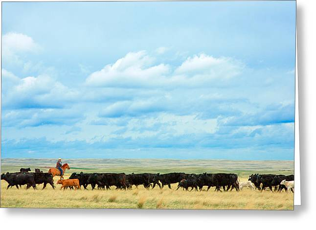 Bringing In The Herd Greeting Card by Todd Klassy