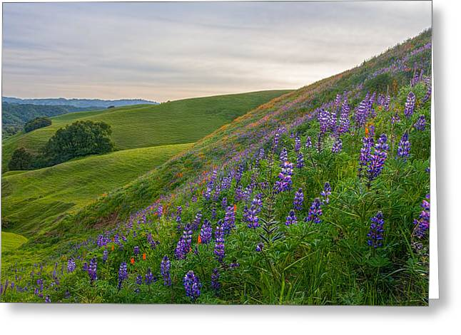 Briones Wildflowers Greeting Card