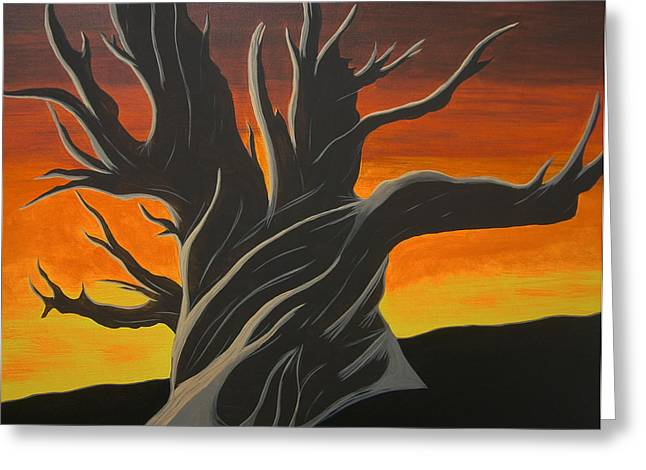 Bristle Cone Pine At Dusk Greeting Card by Drew Shourd