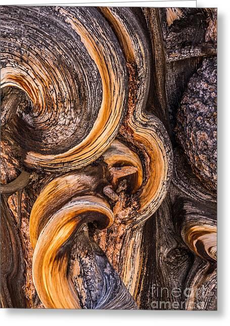 Bristlecone Pine Detail Greeting Card by Alexander Kunz