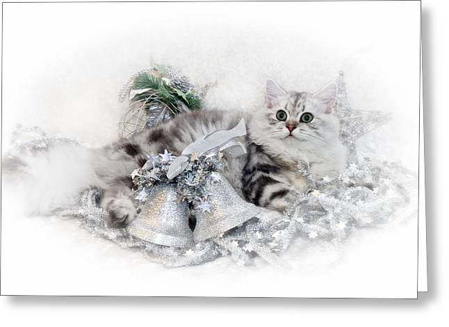 British Longhair Cat Christmas Time Greeting Card by Melanie Viola