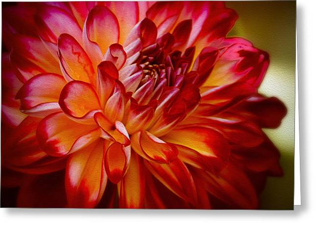 Brittany Red Dahlia Greeting Card