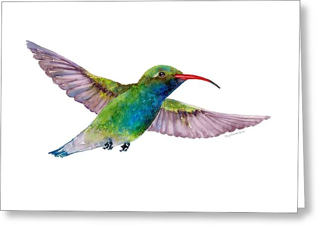 Broad Billed Hummingbird Greeting Card