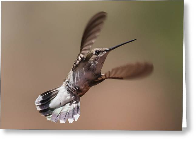 Broad-tailed Hummingbird 2 Greeting Card