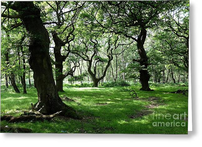 Brocton Coppice Greeting Card by John Chatterley