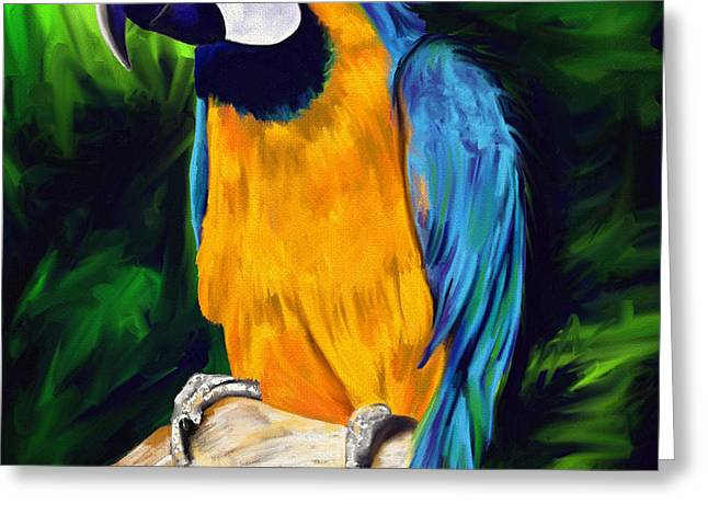 Brody Blue And Yellow Macaw Parrot Greeting Card