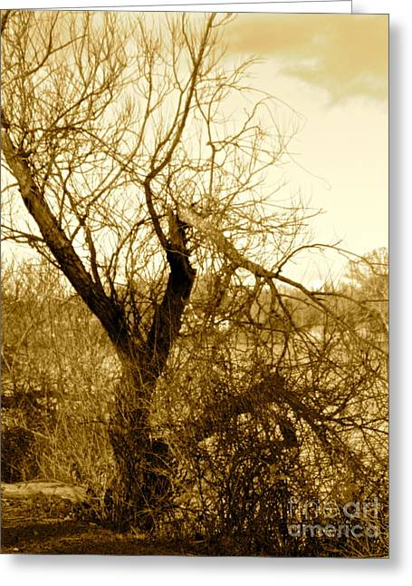 Broken But Beautiful Tree Greeting Card by Q's House of Art ArtandFinePhotography