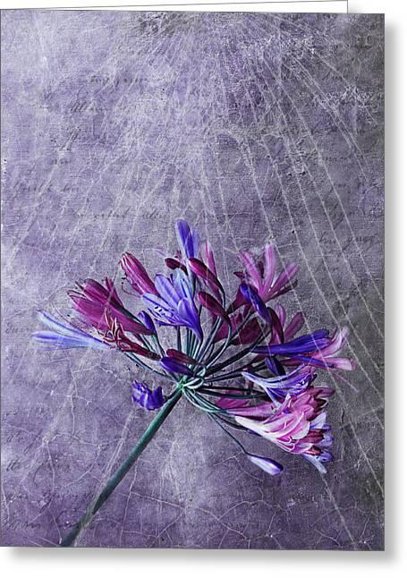 Broken Dreams Greeting Card by Claudia Moeckel