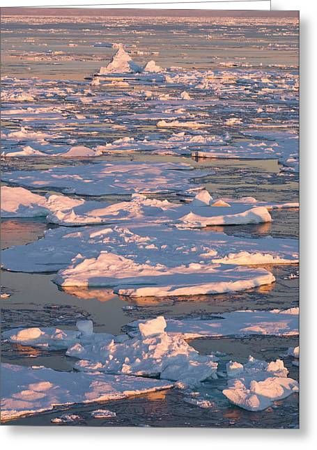Broken Pack Ice At Sunrise, Godthab Greeting Card by Daisy Gilardini
