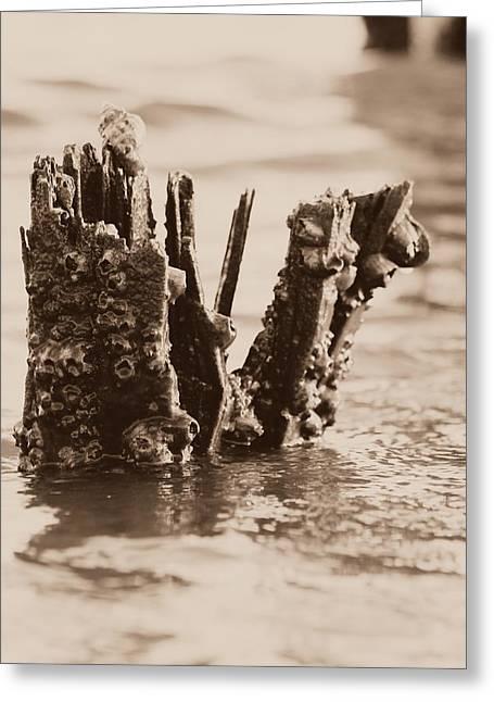 Broken Pier II Greeting Card by Hillery Bosarge