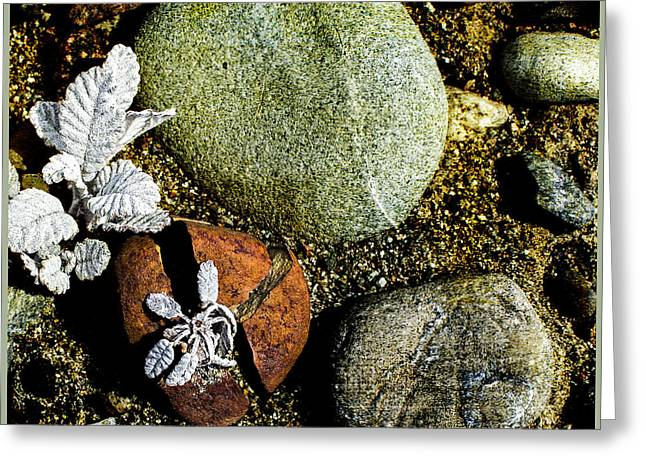 Broken Rock Dryas Greeting Card