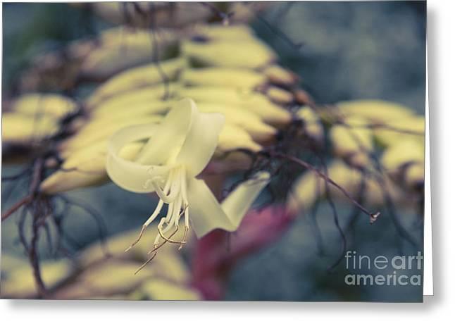 Bromeliaceae - Alcantarea Geniculata Greeting Card by Sharon Mau