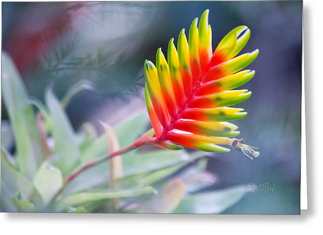 Bromeliad Beauty Greeting Card