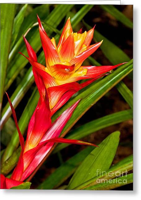 Bromeliad Blossom - Tillandsia Greeting Card