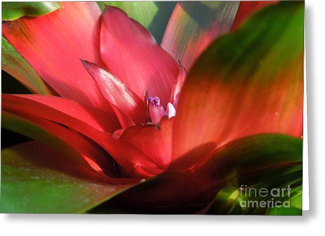 Bromeliad Greeting Card by Chad and Stacey Hall