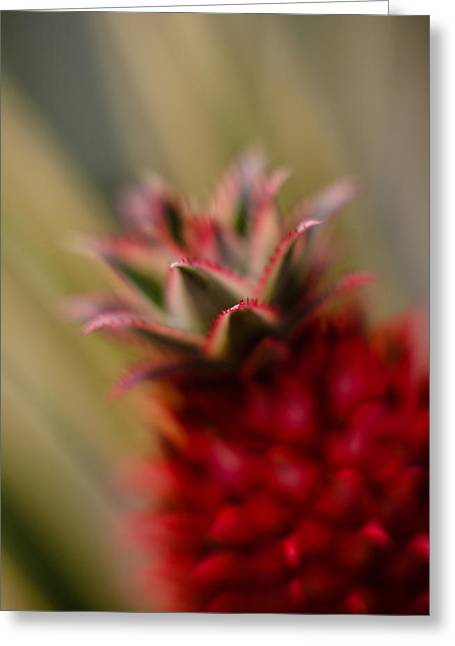 Bromeliad Crown Greeting Card by Mike Reid