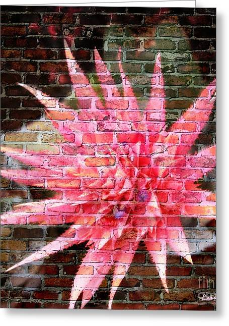 Bromeliad On The Wall Greeting Card