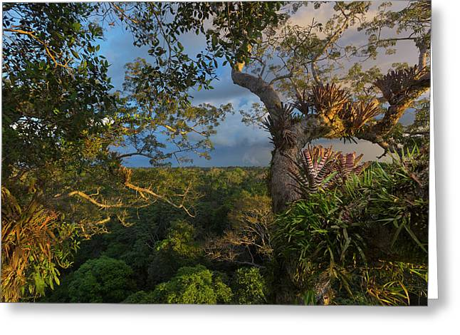 Bromeliads, Ferns, And Orchids Cover Greeting Card by Steve Winter