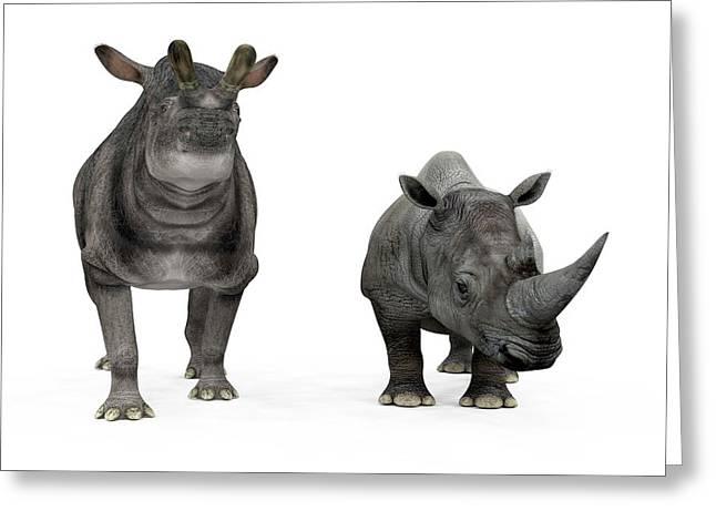 Brontotherium And Rhino Compared Greeting Card by Walter Myers