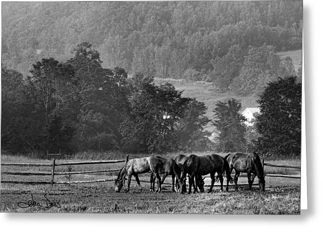 Greeting Card featuring the photograph Broodmares by Joan Davis