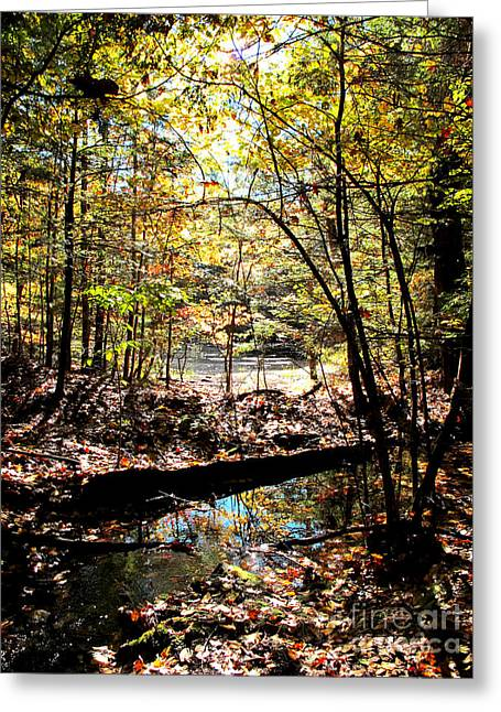 Brook And Pond Greeting Card by Linda Marcille