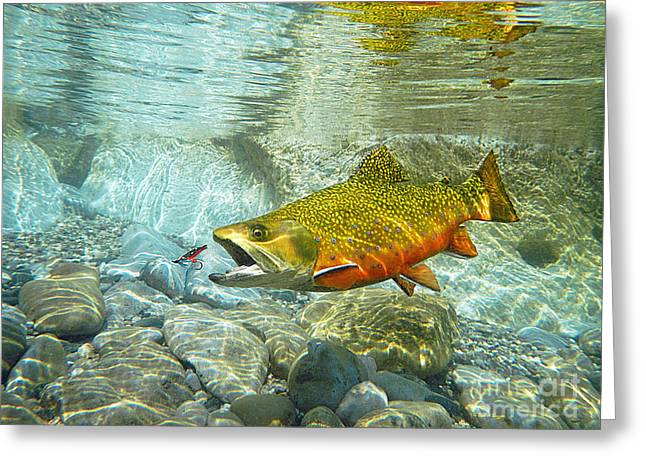 Brook Trout And Artificial Fly Greeting Card by Paul Buggia