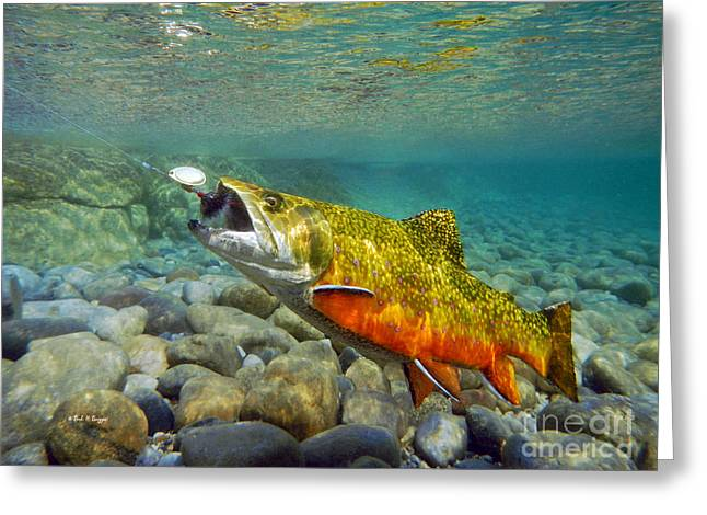 Brook Trout And Mepp's  Greeting Card by Paul Buggia