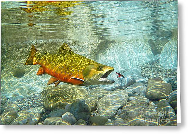 Brook Trout And Silver Doctor Greeting Card