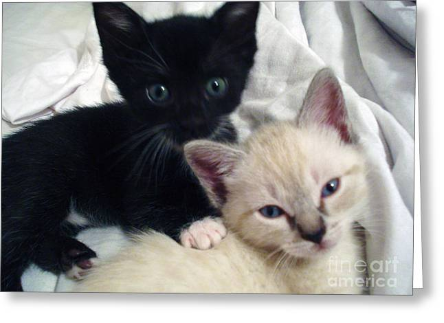 Brother N Sister Kittens Greeting Card