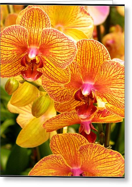 Smiling Brown And Pink Orchids Greeting Card by Kathy Barney