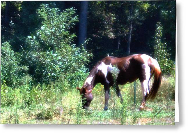 Brown And White Horse Grazing Greeting Card