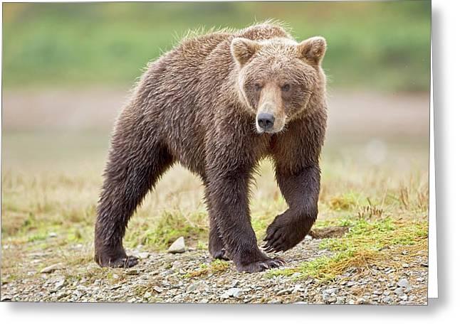 Brown Bear Greeting Card by John Devries