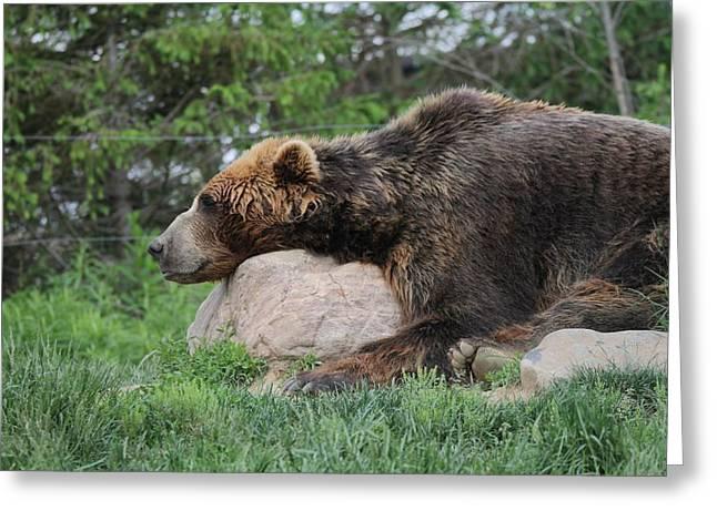 Brown Bear Nap Greeting Card