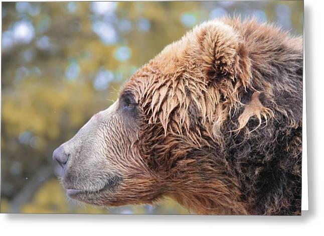 Brown Bear Portrait In Autumn Greeting Card